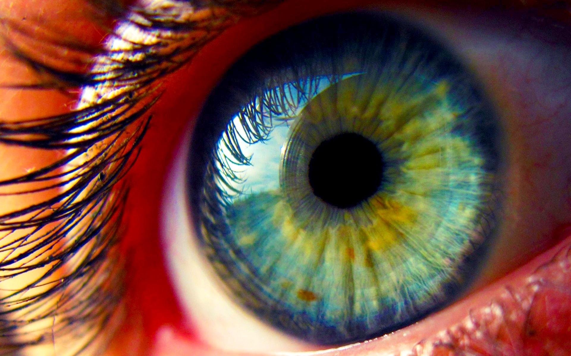 eyelashreflectionintheeyemacrophotography jasper
